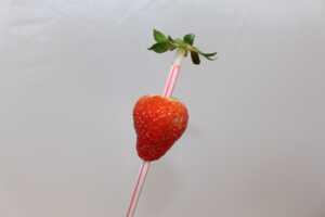Erdbeeren von Stiel befreien